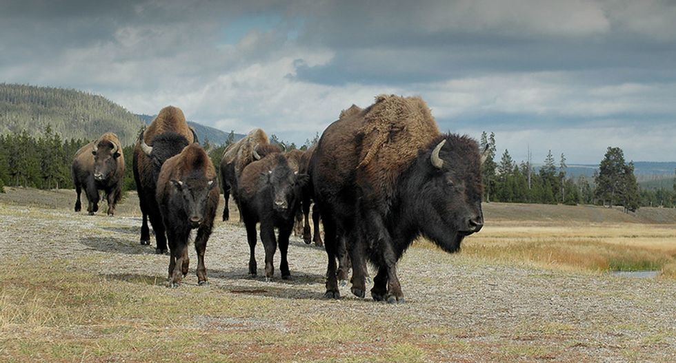 Here's how Yellowstone became the 'most scientifically contested piece of ground in America'