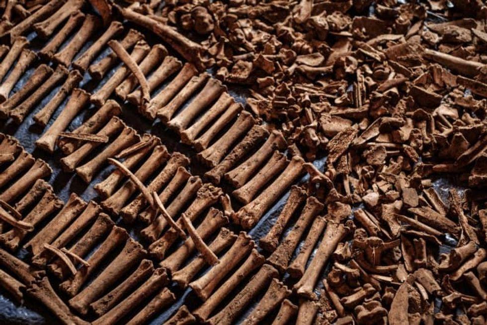 France arrests fugitive Rwandan genocide 'financier'