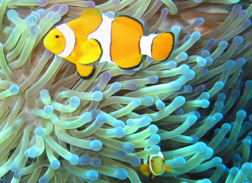 Here's One Astonishing Fact About Earth's Biological Diversity That Is Truly Out-of-This-World