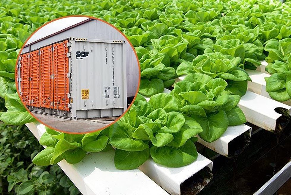 5 People Died From Eating Lettuce  -  But Trump's FDA Still Won't Make Farms Test Water For Bacteria