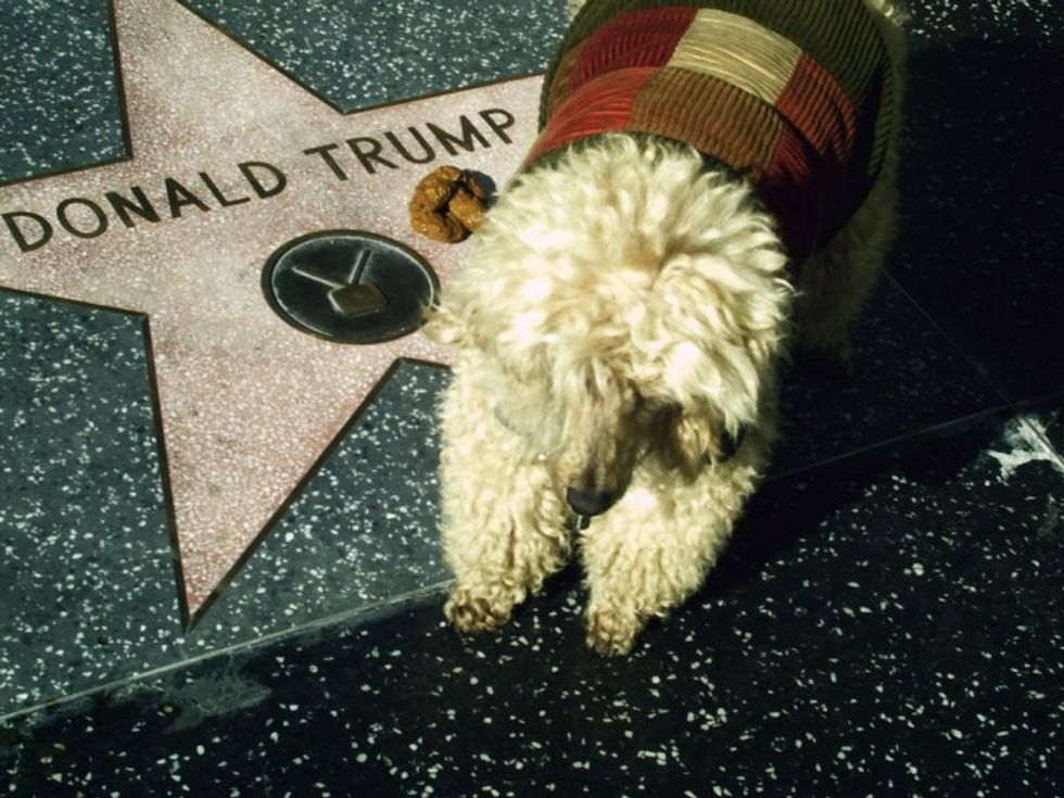 Why doesn't Trump have a dog  -  and should he get one? Experts weigh in