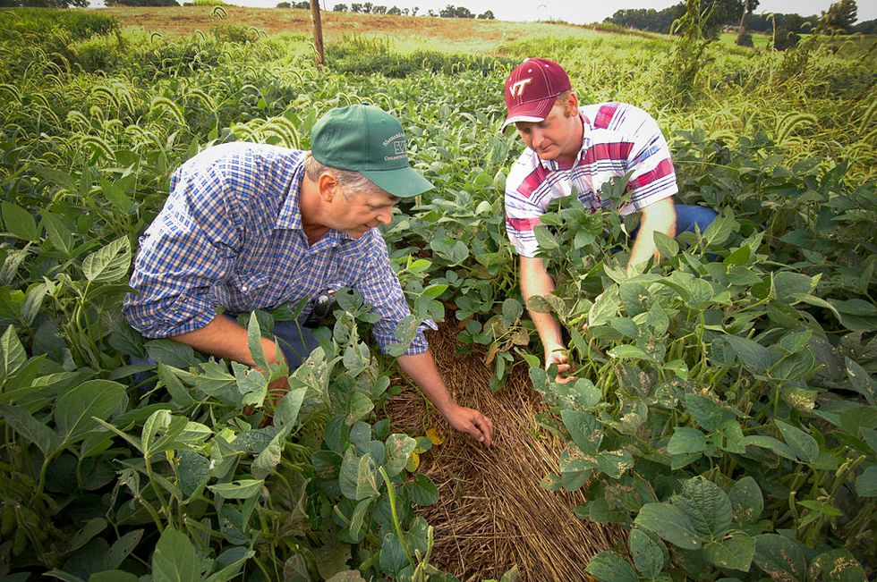 How the raw greed of corporate monopolists has squeezed the farming industry