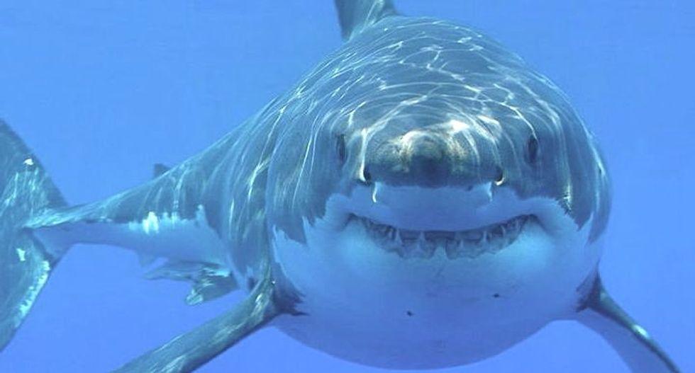 Shark Week looms -- but don't panic