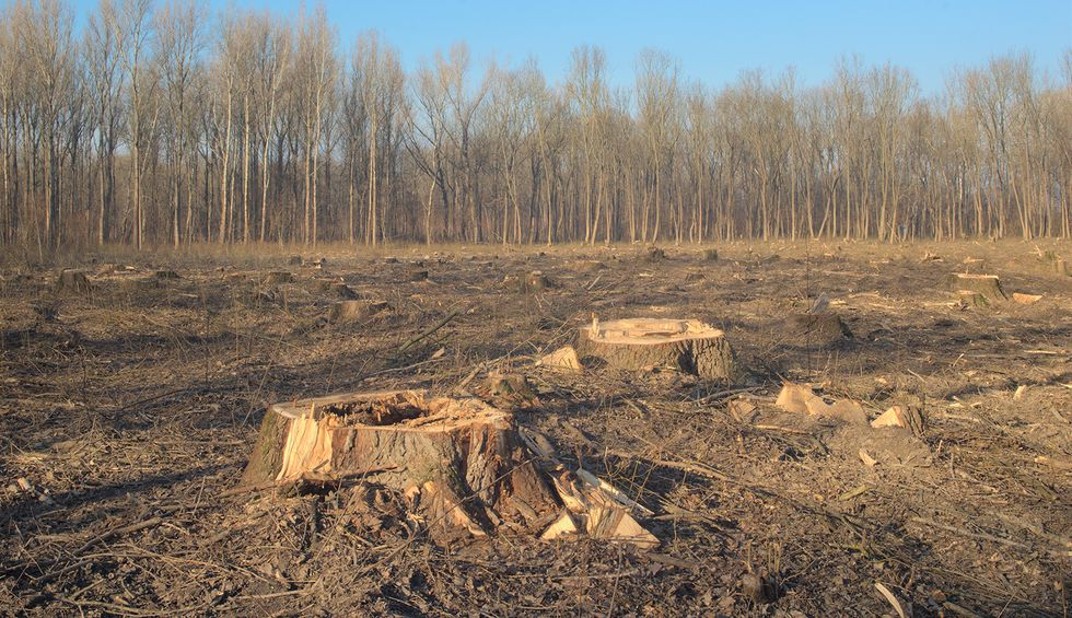 Forest Service weighs plan to lay waste to tens of thousands of acres of old-growth trees
