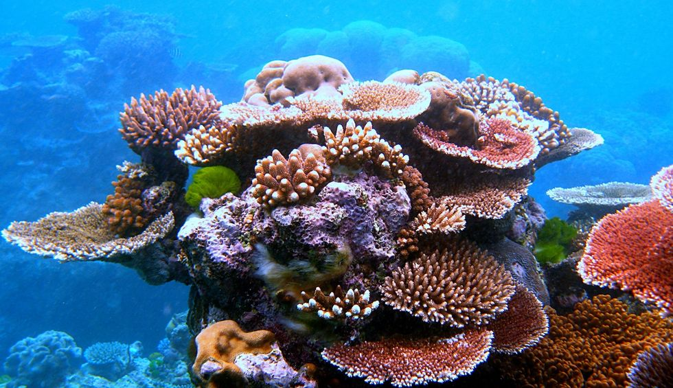 Great Barrier Reef is at risk of catastrophe as temperatures in Australia remain high