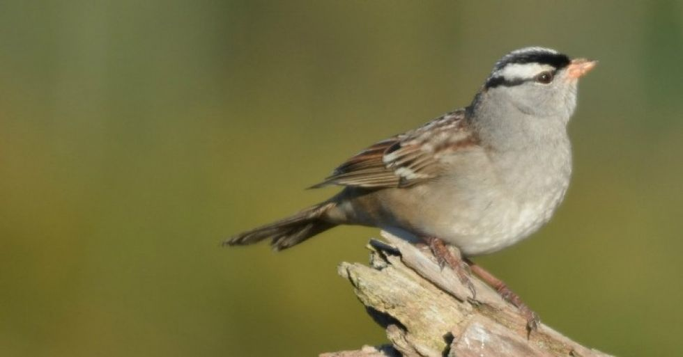 Scientists warn of a 'frightening future' for birds in North America as temperatures rise