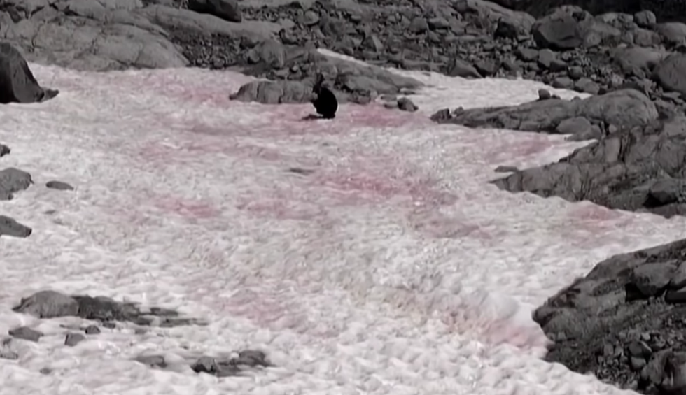 Bizarre pink snow in the Alps is actually a bad omen for Earth