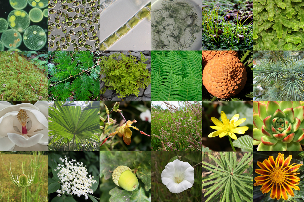 We found the genes that allowed plants to colonize land 500 million years ago