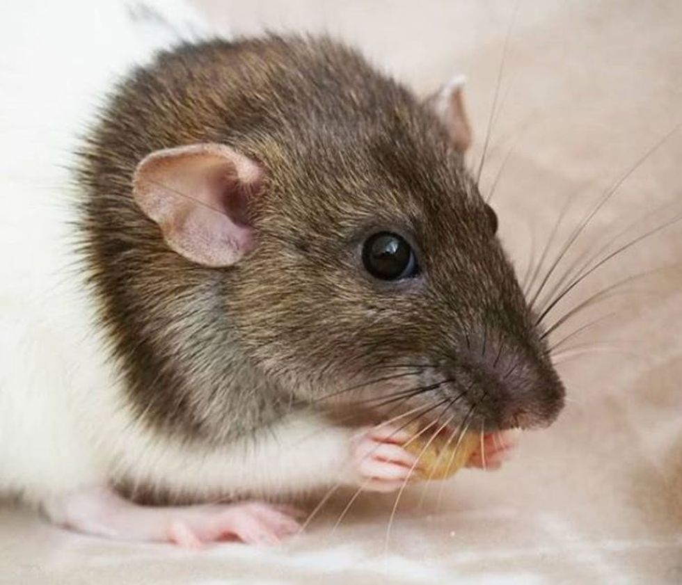 How we found a special math equation hidden in rat whiskers