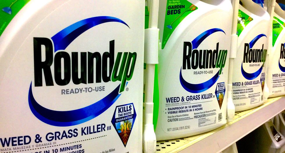 Another guilty verdict for Monsanto as jury finds weed-killer was a 'substantial factor' in causing man's cancer