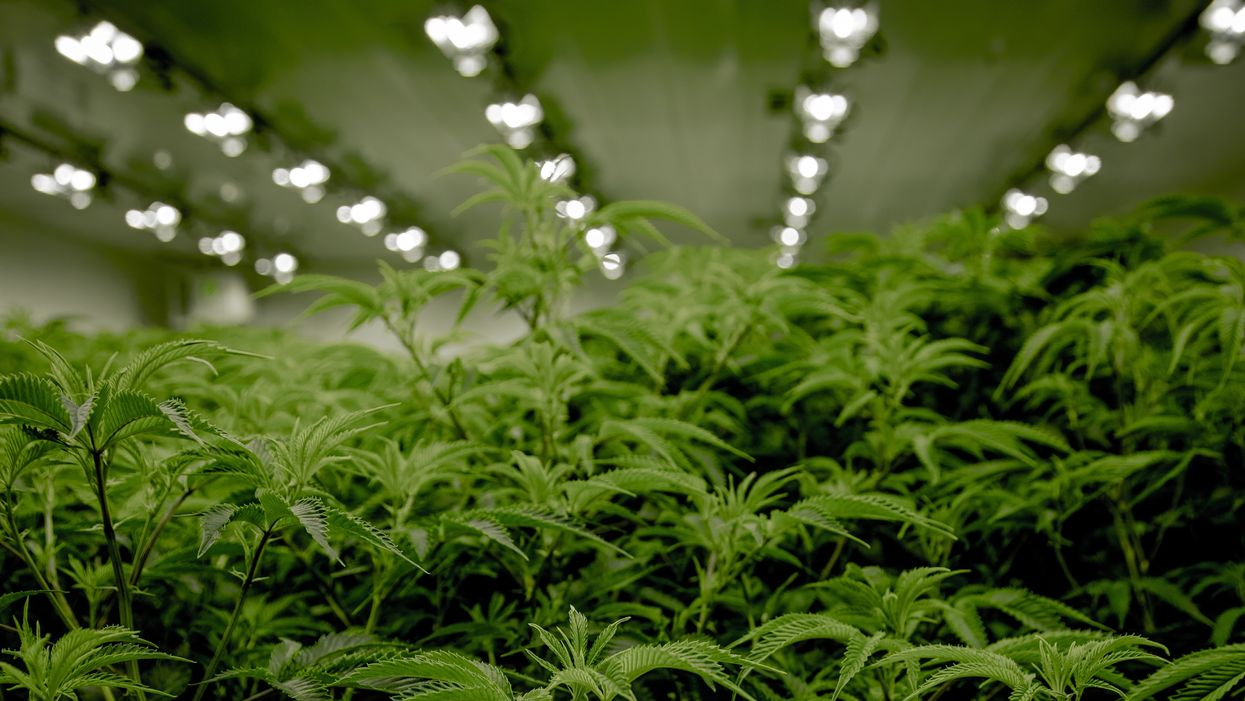 Will New Jersey be the next state to legalize marijuana?