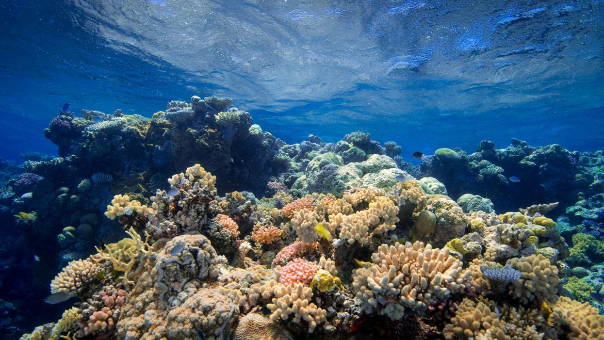 Climate crisis is the primary cause of 98% of dead Florida coral reef: NOAA research