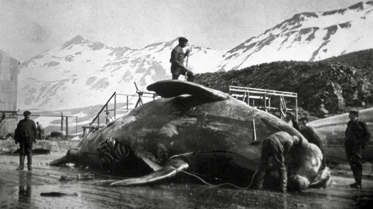 People discovered Antarctica 200 years ago — and promptly began slaughtering some of its animals to near extinction