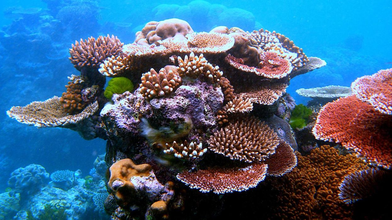 A world without coral reefs may be on the horizon