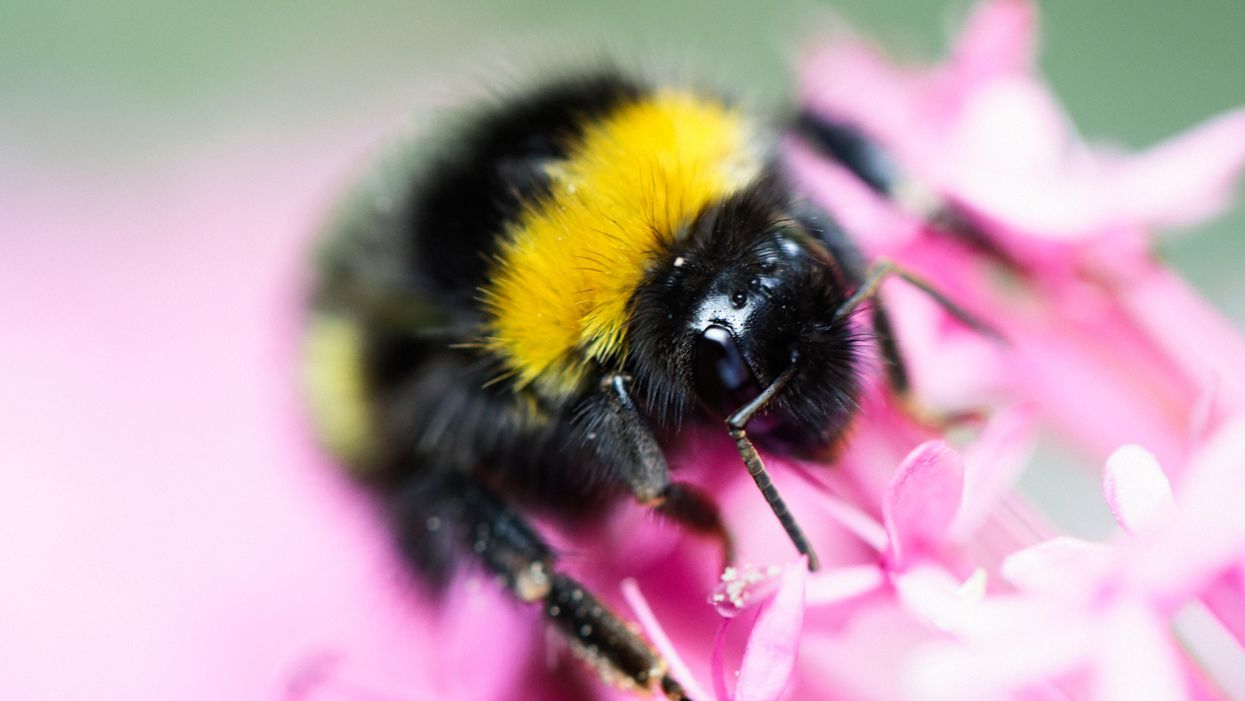 New study finds undisclosed ingredients in Roundup is lethal to bumblebees