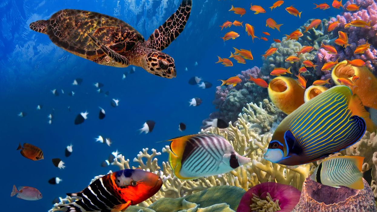 Marine life is fleeing the equator to cooler waters. History tells us this could trigger a mass extinction event