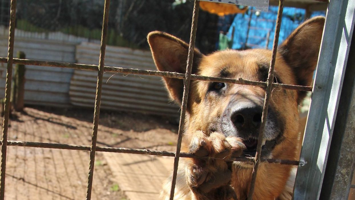 Taxpayers are funding cruel and outdated DOJ training programs that kill animals
