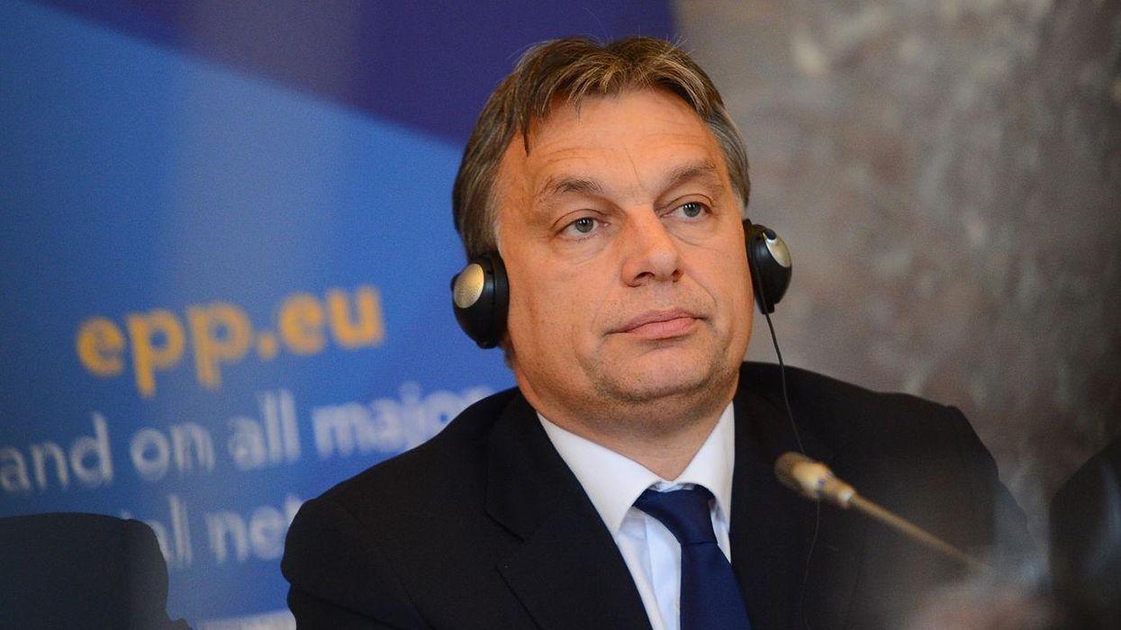 Hungarian conservative blasts Tucker Carlson for praising strongman Viktor Orbán: 'You've been had'