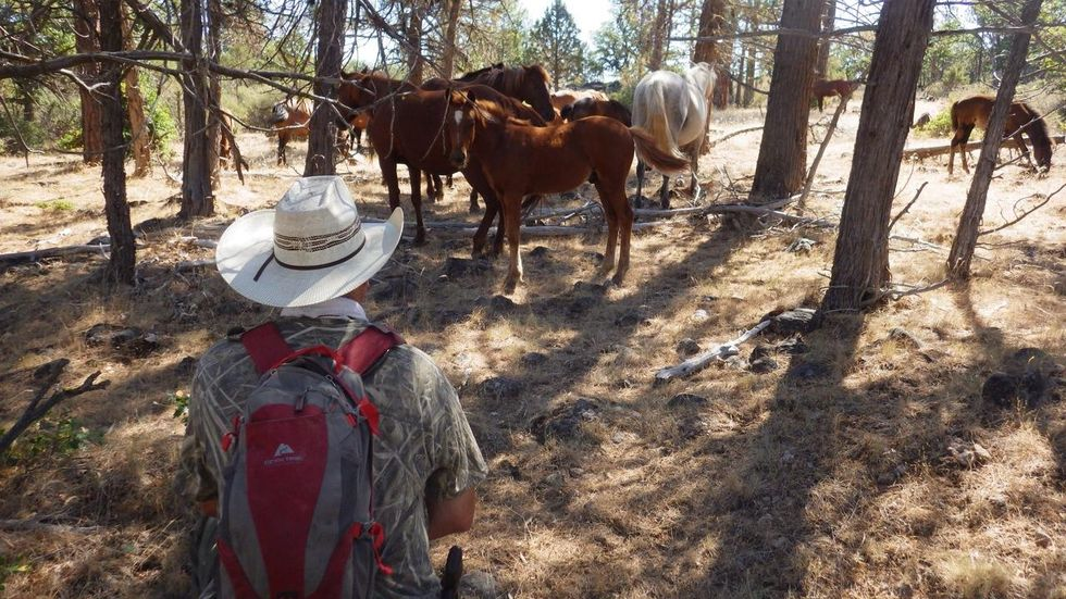 Profiting From Ecotourism – Town's Economy Boosted By Wild Horses!