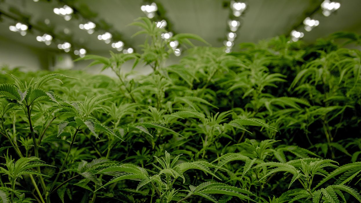A federal judge says the DEA may be required to reclassify marijuana