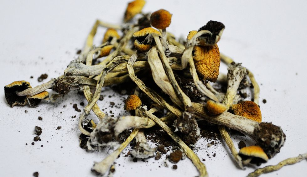 Oakland decriminalizes hallucinogenic mushrooms and peyote
