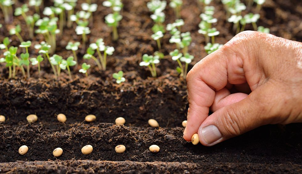 Why China is emerging as a leader in sustainable and organic agriculture