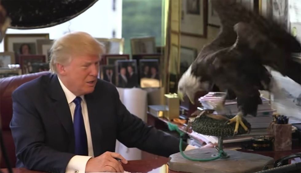 It saved America's bald eagle — now Trump will strangle Endangered Species Act so big oil can profit