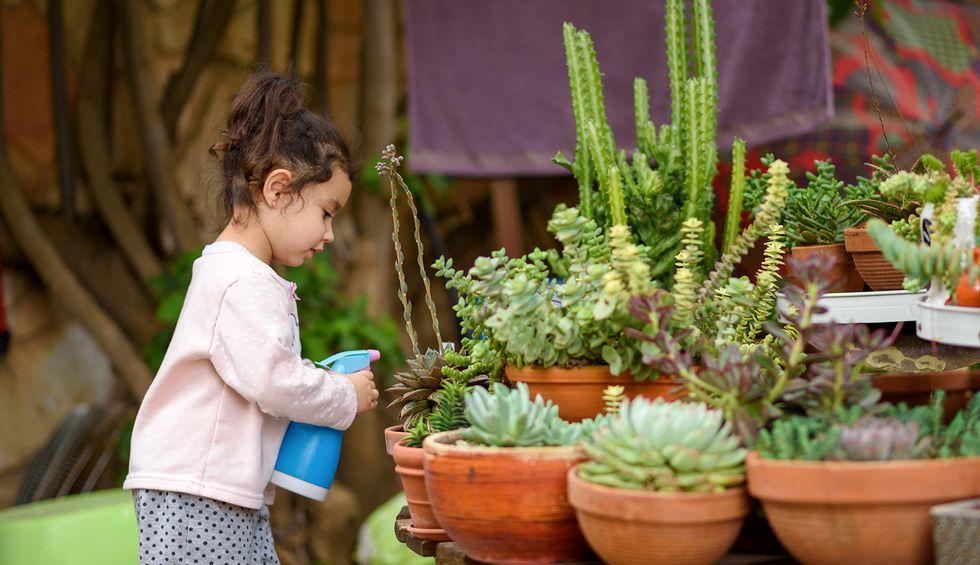 Millennials are killing rare succulents