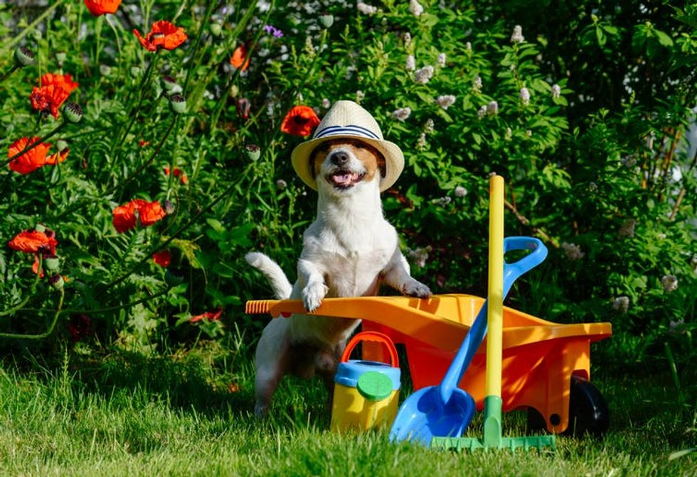 Don't waste your dog's poo – compost it