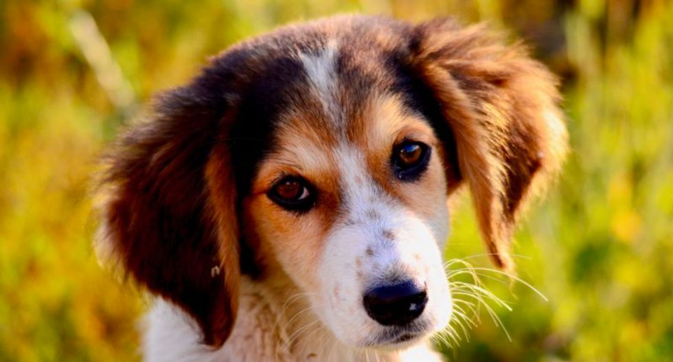 How selective breeding messes with dogs' brains