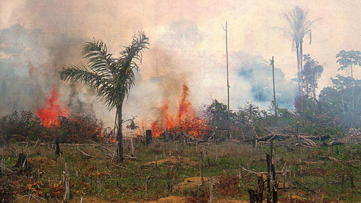 'Frightening' new data reveals humanity's destruction of the world's rainforests