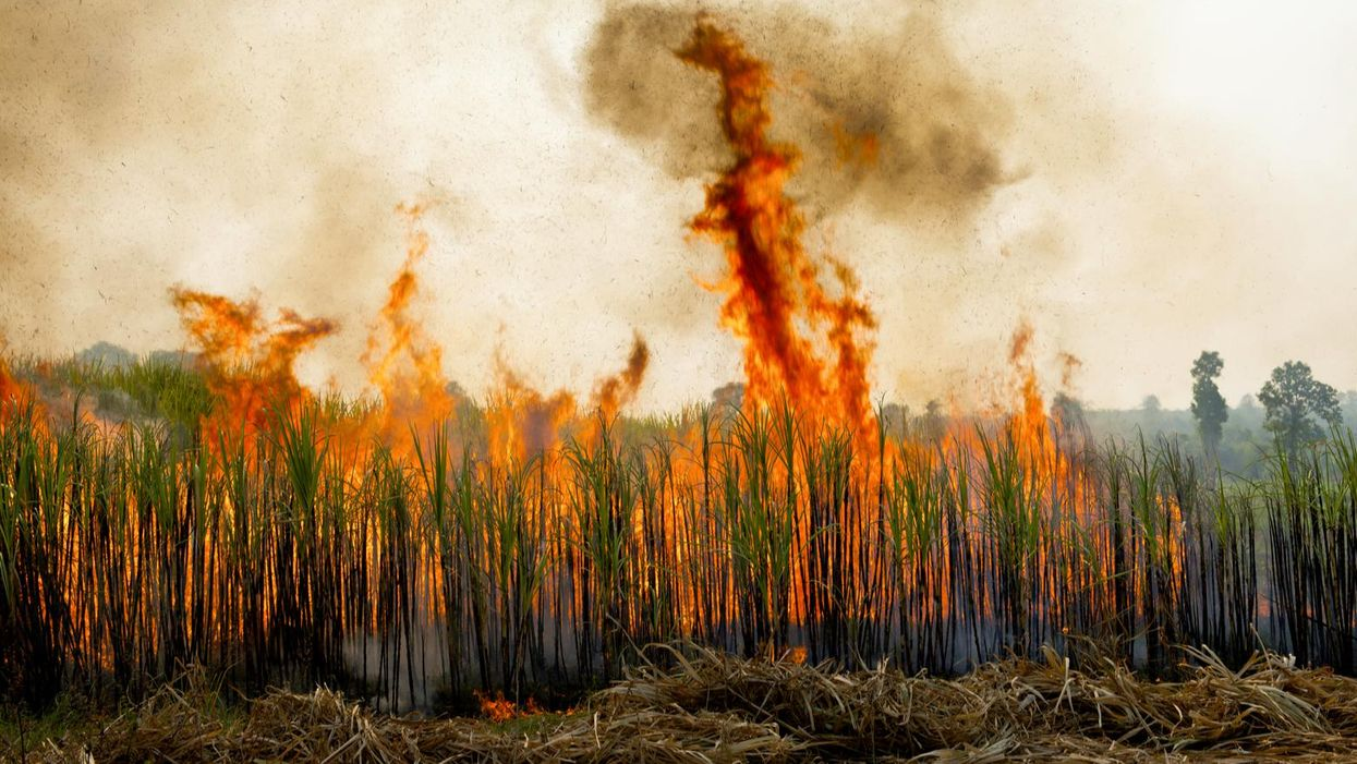 'A complete failure of the state': Authorities didn't heed researchers' calls to study health effects of burning sugar cane