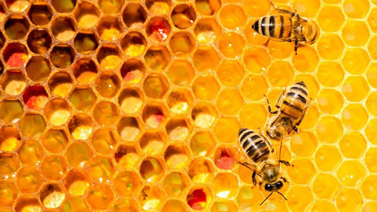 'Planetary health declaration' issued ahead of key biodiversity summit
