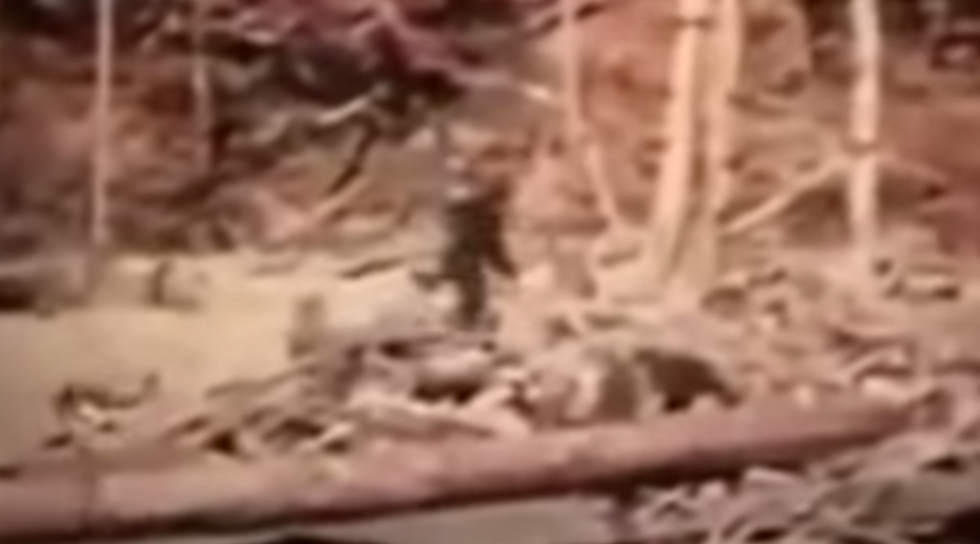 FBI reveals that it once worked on an investigation into the existence of Bigfoot